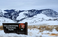 Yellowstone National Park (YNP)