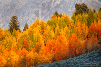 Mountainside Fall Color