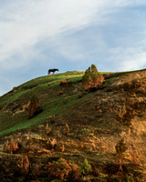 Horse on hill (TRNP)  8x10